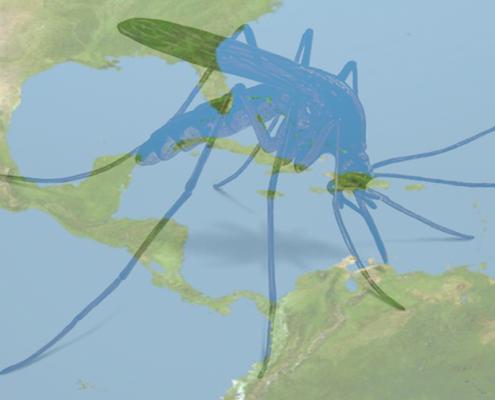 mosquito-1030x820